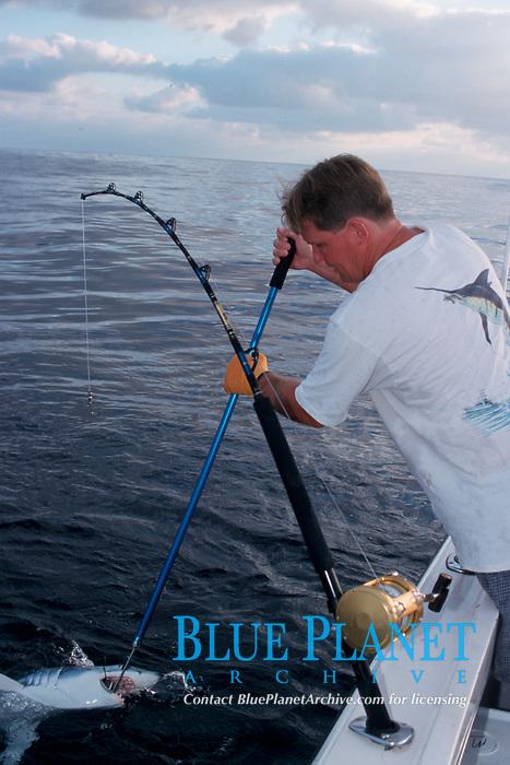 mako shark, Isurus oxyrinchus, release stick, sport fisherman, Redondo Beach, California, USA, East Pacific Ocean