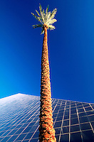Abstract view of the exterior of the Luxor Hotel and a palm tree against a deep blue, morning sky. Las Vegas, Nevada.