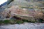 Lower lias sedimentary rocks in cliff face, Watchet, Somerset, England
