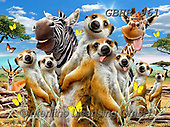 Howard, REALISTIC ANIMALS, REALISTISCHE TIERE, ANIMALES REALISTICOS, paintings+++++,GBHR961,#a#, EVERYDAY ,Selfie,Selfies