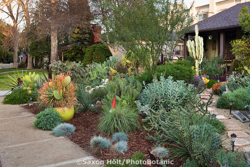 Small space front yard drought tolerant Los Angeles, California plant collector garden, lawn substitute with native plants by sidewalk