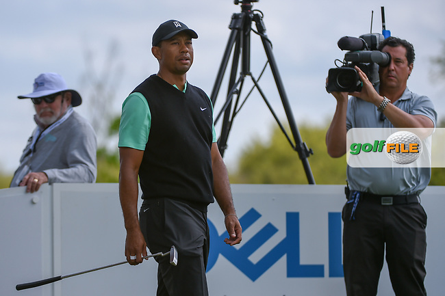Tiger Woods (USA) looks over his tee shot on 3 during day 2 of the WGC Dell Match Play, at the Austin Country Club, Austin, Texas, USA. 3/28/2019.<br /> Picture: Golffile   Ken Murray<br /> <br /> <br /> All photo usage must carry mandatory copyright credit (© Golffile   Ken Murray)