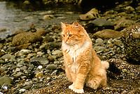Cat sitting on Maine beach, yellow tabby