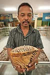 Curator Endi Pajis shows off a Stegodon (fossil elephant) tooth at a natural history museum near Maumere, Flores.