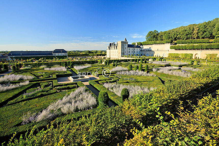 "France, Jardins du château de Villandry, au premier plan le ""Jardin dornement 2e salon"" (topiaires de buis et ifs, sauges, Perowskia) // France, Gardens of Villandry castle in the foreground the ""Music Garden"" (topiary of yews and boxwood, salvia, Perowskia)"