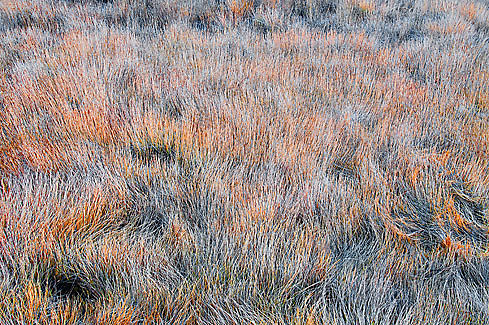 Grass in Bow Summit, Banff National Park, Alberta - Canada