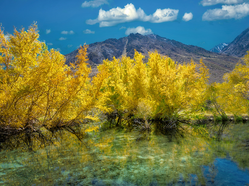 Small beaver pond on McGee Creek with fall color. Eastern Sirra Nevada mountains, California