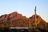 62745-00507 Evening landscape along Ajo Mountain Drive Organ Pipe National Monument   AZ