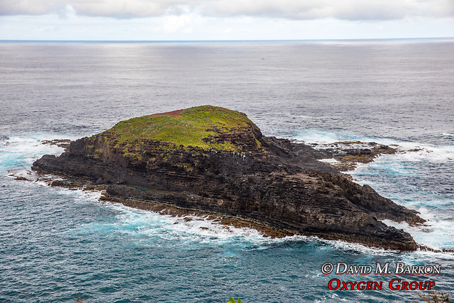 Island Off Kilauea Point
