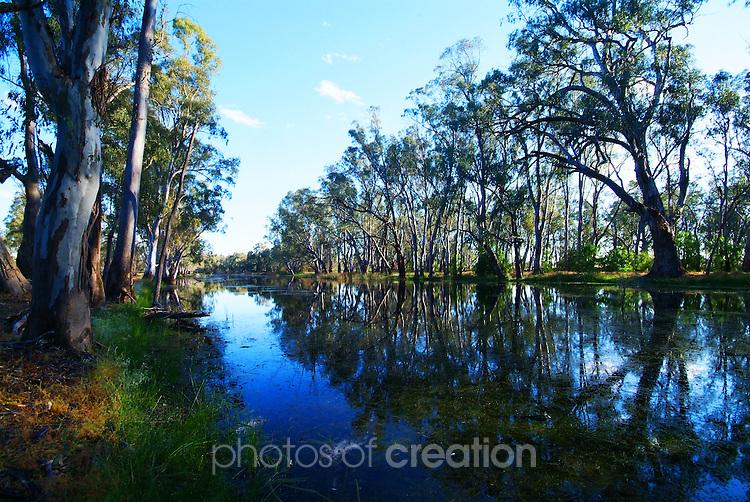 REd Gum Forrest near Mathoura NSW