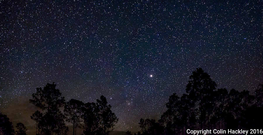 CLIO, FLA. 5/29/16-Stars shine through the pines of the Apalachicola National Forest. Located in the heart of the panhandle the forest has some of the best star-gazing skies in Florida. <br /> <br /> EDITOR'S NOTE: This image is comprised of multiple photos taken at the same moment and stitched together in photoshop to create a panorama.<br /> <br /> COLIN HACKLEY PHOTO