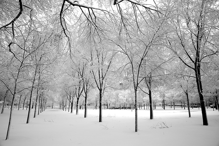 A late season blanket of snow covers Chicago's lakefront and Millennium Park as the harsh winter of 2014 keeps its grip on the city for a few more days, March 12, 2014. (DePaul University/Jeff Carrion)