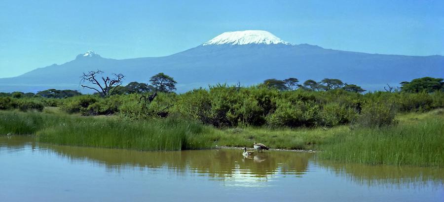 Mt Kilimanjaro From The Amboseli National Park, Kenya.
