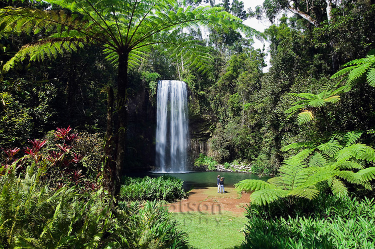 Millaa Millaa Falls on the Atherton Tablelands near Cairns, Queensland, Australia