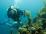 "Diving Bonaire, Netherland Antilles -- Divers explore the reef at the ""Karpata"" dive site."