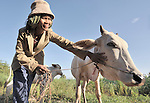 Sim Sari cares for her cow in the Cambodian village of Talom.