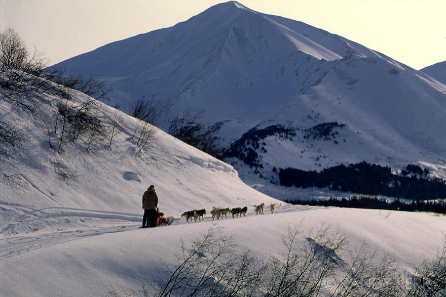 Dogmushing near Hope, Alaska