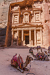 Camels in front of Al Khazneh or the Treasury in the Nabataean city of Petra in the Hashemite Kingdom of Jordan.  Petra Archeological Park is a Jordanian National Park and a UNESCO World Heritage Site.
