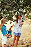 Teenage girls picking apples. Alpine, Oregon.