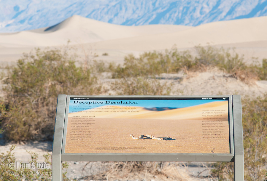 An interpretive exhibit at Mesquite Flat sand dunes features a photo of a Mojave desert sidewinder, Crotalus cerastes cerastes,  by wildlife photographer Dan Suzio. Death Valley National Park, California