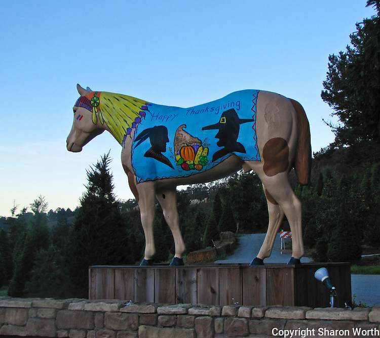 Old Paint, the horse statue at the east end of Half Moon Bay, is all decked out for Thanksgiving.