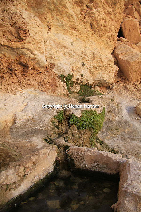 Israel, Ein Netafim the only spring in Eilat mountains