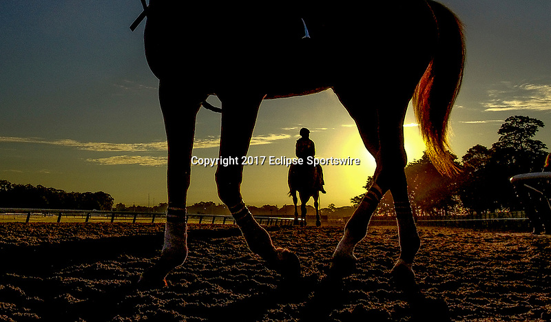 ELMONT, NY - JUNE 09: Horses exercise during morning workouts in preparation for the Belmont Stakes at Belmont Park on June 9, 2017 in Elmont, New York (Photo by Sydney Serio/Eclipse Sportswire/Getty Images)