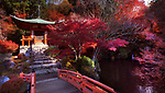 Bridge leading to Bentendo Hall over a pond with Zen garden at Daigo-ji temple in a beautiful autumn scenery. Shimo-Daigo part of Daigoji complex in bright red colors. Shingon Buddhist temple in Fushimi-ku, Kyoto, Japan 2017.