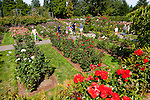 Portland international Rose Test Garden located in Washington Park in downtown SW Portland Oregon
