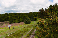 Dog walker, Ashdown Forest, Sussex, UK, May 20, 2017. Picturesque Ashdown Forest stretches across the countries of Surrey, Sussex and Kent, and is the largest open access space in the South East of England. It is famous as the geographical inspiration for the Winnie the Pooh stories and is popular with fans of the characters.