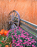 Bureau County, IL  &copy; Terry Donnelly  <br /> Fall scene of native prairie grasses, pumpkins, chrysanthemums with weathered fence &amp; wagon wheel
