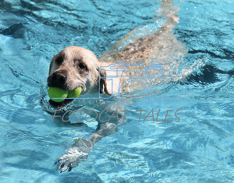Images from the 9th annual Pooch Plunge at the Carson City Aquatics Center in Carson City, Nev., on Saturday, Sept. 23, 2017. The event is a fundraiser for Carson Animal Services Initiative which supports the Nevada Humane Society in Carson City. <br /> Photo by Cathleen Allison/Nevada Photo Source