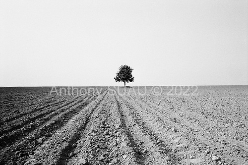 Cosoveni, Wallachia<br /> Romania<br /> May 7, 1992<br /> <br /> Tree in the field