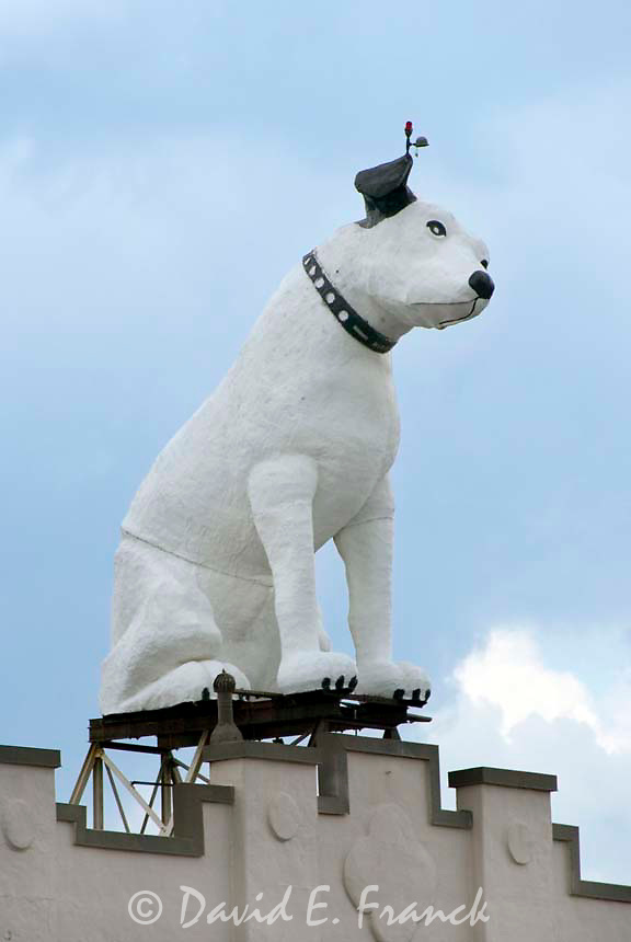 Nipper the RCA dog on top of a warehouse in downtown Albany, New York.