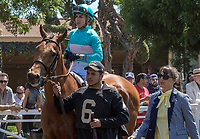 ARCADIA, CA. MAY 27: #6 Lady Eli ridden by Irad Ortiz, Jr, in the walking ring before the Gamely Stakes (Grade l) on May 27, 2017 at Santa Anita Park in Arcadia, CA (Photo by Casey Phillips/Eclipse Sportswire/Getty Images)