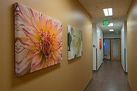 Overlake Hospital Pulm - Internal Medicine Clinic corridor artwork