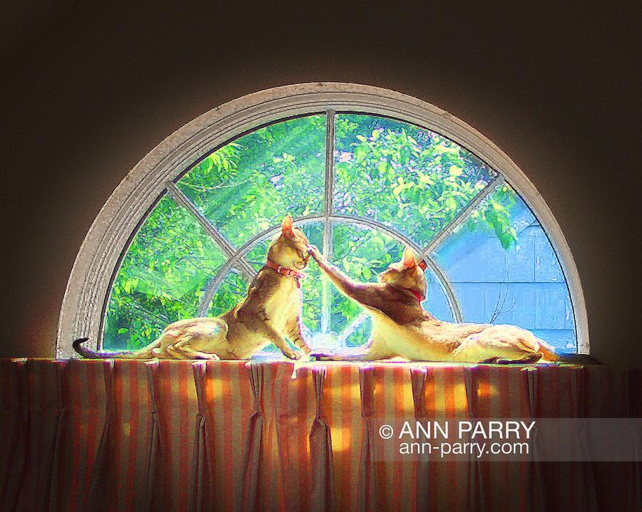 First digital photo I took. Two Singapura cats lying on curtain rod high in half-moon window. post-processing