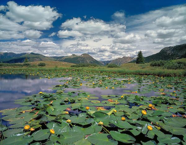 Lillies on an alpine lake, Weminuche Wilderness, Molas Pass, Silverton, Colorado John guides custom photo tours in the Sneffels Range and throughout Colorado. .  John leads private photo tours throughout Colorado. Year-round Colorado photo tours.