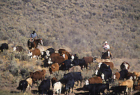 Cowboys herding cattle. #2 Ponderosa Ranch, Seneca, OR.