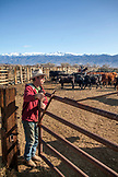 USA, California, Mammoth, cowboy enters the cattle pin on Tatum Ranch in Bishop