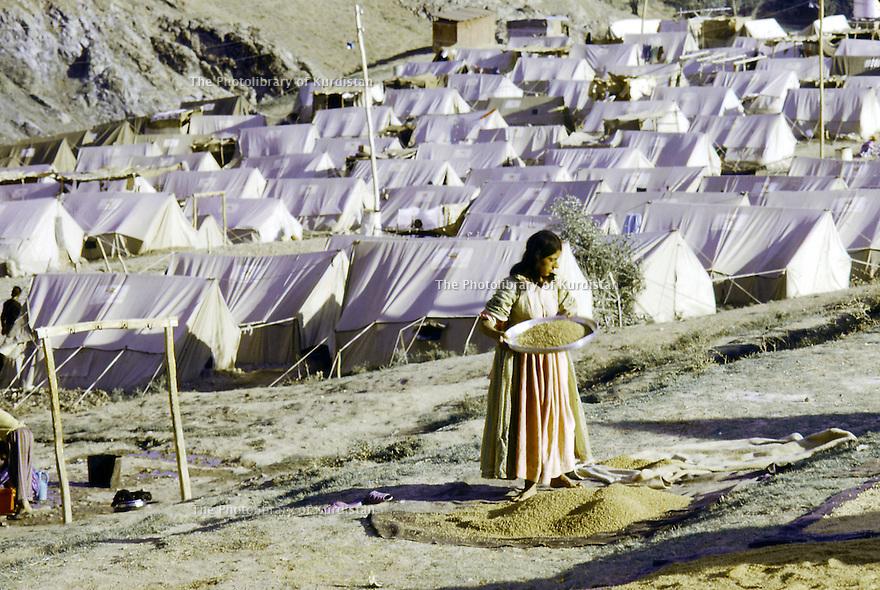 Iran 1974.Camp de réfugiés kurdes à Nelliwan, femme avec un tamis pour les grains de blé.Iran 1974.Kurdish refugees' camp, woman with a strainer