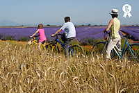 Mother, son (12-13) and daughter (6-7) contemplating lavender field during bicycle trip (Licence this image exclusively with Getty: http://www.gettyimages.com/detail/sb10065145y-001 )