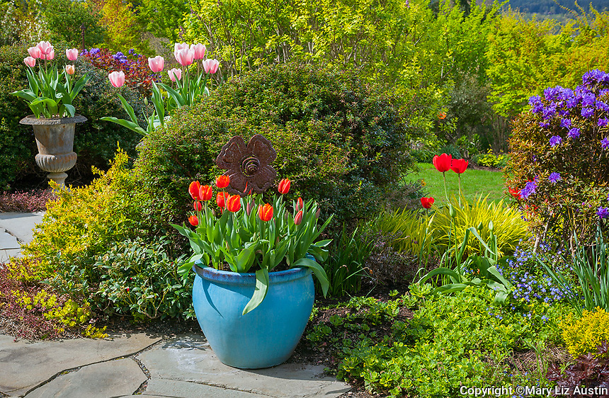Vashon-Maury Island, WA: Flagstone patio featuring colorful pots with tulips edged by perennial garden beds.