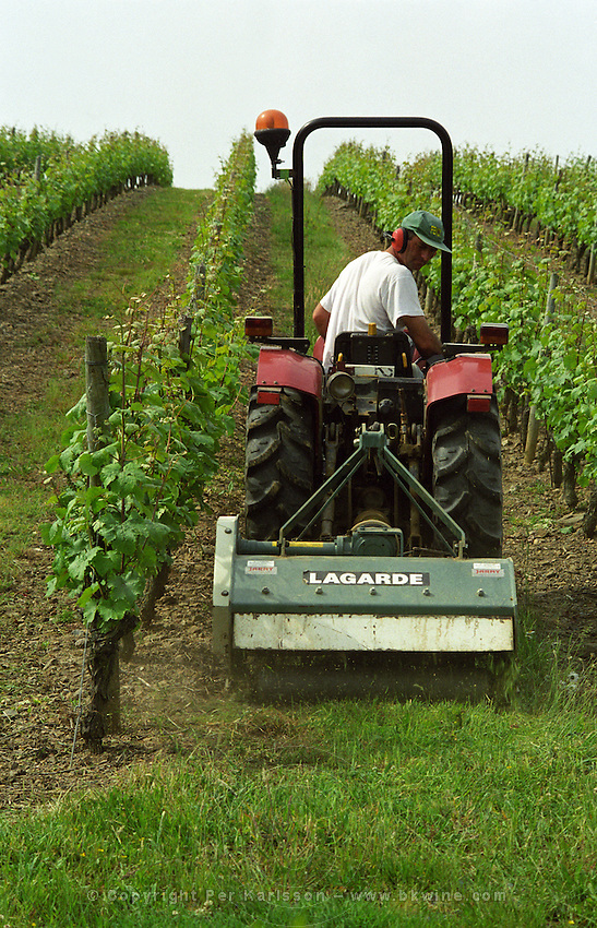 Mowing grass between rows of vines. Chateau de la Soucherie, anjou, Loire, France