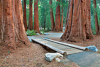 Small bridge with Giant Redwoods into Sequoia National Park, California