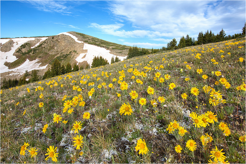 This is one of my favorite places to photograph Colorado wildflowers.<br />