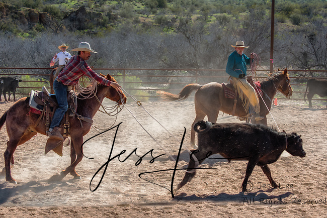Cowboy roping and riding Cowboy Photo Cowboy, Cowboy and Cowgirl photographs of western ranches working with horses and cattle by western cowboy photographer Jess Lee. Photographing ranches big and small in Wyoming,Montana,Idaho,Oregon,Colorado,Nevada,Arizona,Utah,New Mexico.