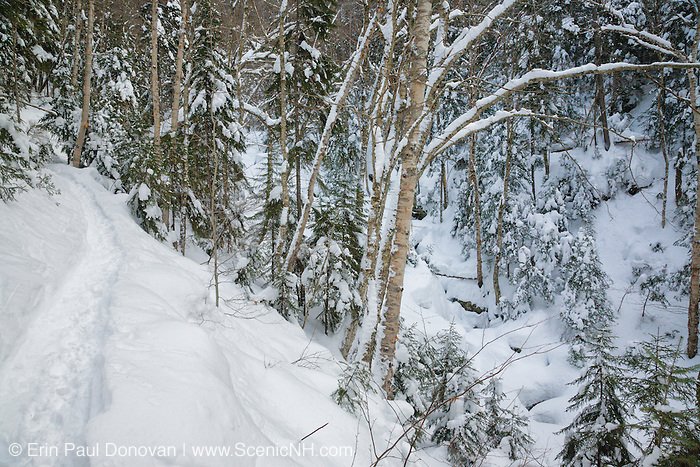 Snow covered forest along the Falling Waters Trail in the White Mountains of New Hampshire USA during the winter months.