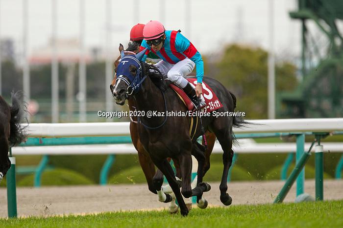 TAKARAZUKA,JAPAN-MAR 07: Maltese Diosa #13,ridden by Hironobu Tanabe,wins the Tulip Sho at Hanshin Racecourse on March 7,2020 in Takarazuka,Hyogo,Japan. Kaz Ishida/Eclipse Sportswire/CSM
