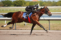 #123Fasig-Tipton Florida Sale,Under Tack Show. Palm Meadows Florida 03-23-2012 Arron Haggart/Eclipse Sportswire.